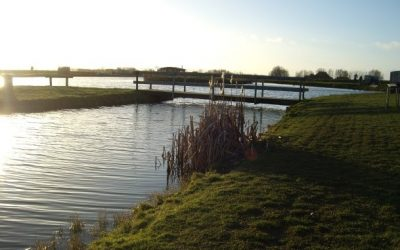 forel water1