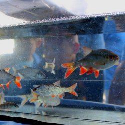 vissen (Kopie)